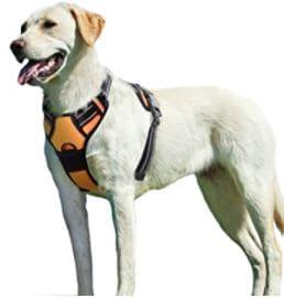 Eagloo harnais chien
