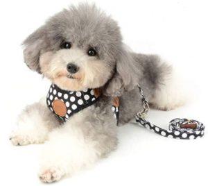 harnais à poids noir et blanc petit chien