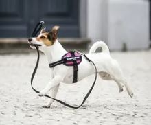 harnais julius petit chien