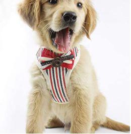 harnais petit chien rayures