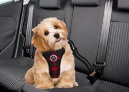 harnais petit chien voiture