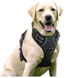 harnais rabitoogo grand chien
