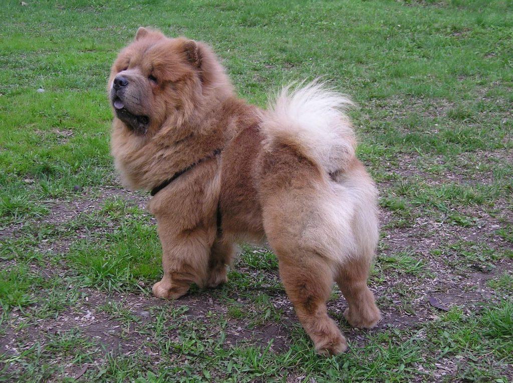harnais truelove grand chien au parc