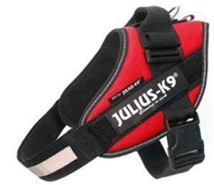 julius k9 rouge