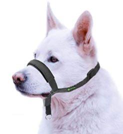 licol chien vert