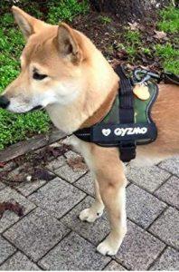 scratch personnalisé harnais chien