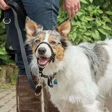 Halti licol anti traction pour chien