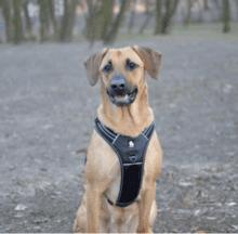 harnais truelove forest pour grand chien